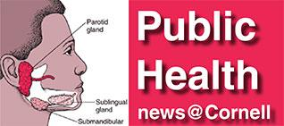 Public health news at Cornell, showing location of parotid gland on face