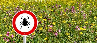 """No ticks"" sign in a field of flowers"